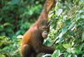 Malaysia Reisen | Borneo