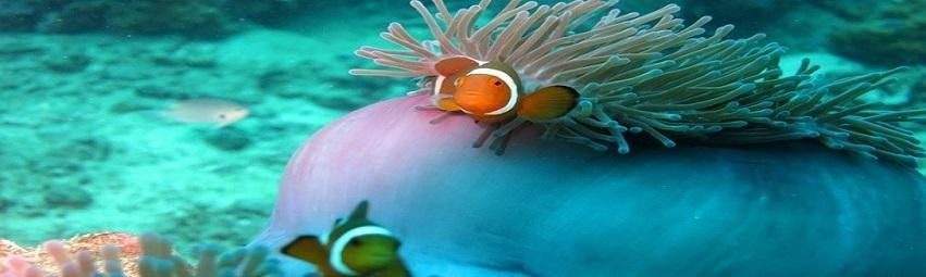 Malaysia-Reisen-Perhentian-Koralle 2.jpg