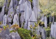 Malaysia Reisen | Mulu Nationalpark