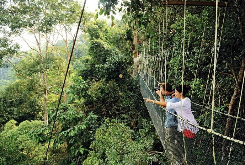Malaysia Reisen | Canopy Walk, Taman Negara