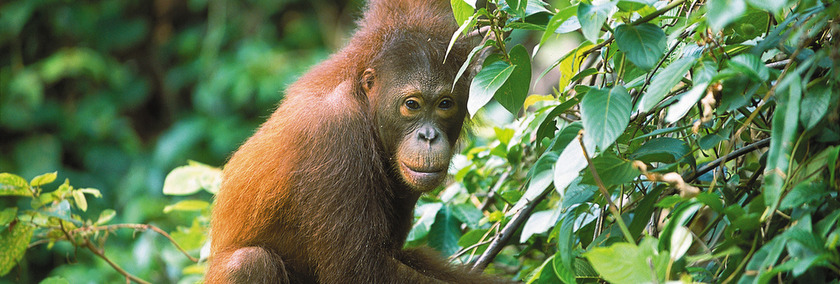 Malaysia Reise | Reiseziel Borneo