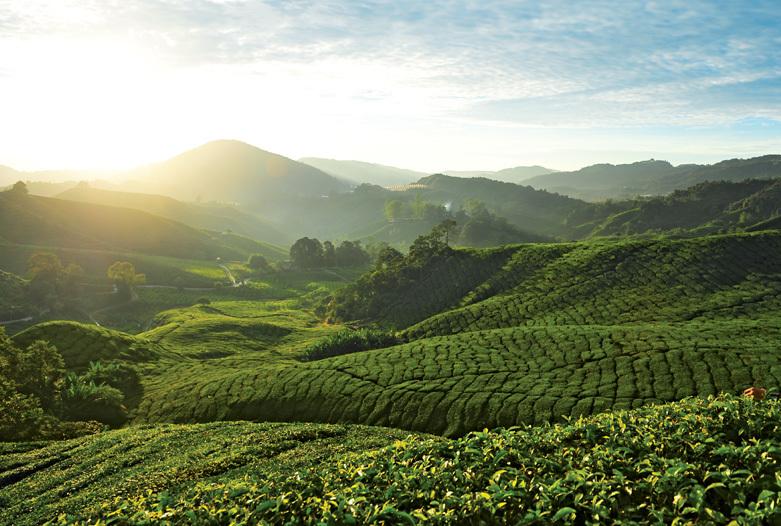 Malaysia Rundreise | Cameron Highlands